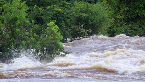 Tropical river floods the African jungle, close-up, Equatorial Guinea. Rapid River in tropical jungle. Equatorial Guinea. Jungle stock video