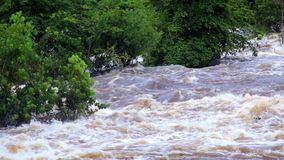 Tropical river floods the African jungle, close-up, Equatorial Guinea. Rapid River in tropical jungle. Equatorial Guinea. Jungle. River in Equatorial Guinea stock video footage