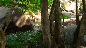 Tropical river flowing in rainforest. Natural landscape stony river in jungle forest. Green forest and river landscape. Wild nature background stock video footage