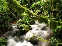 Tropical river in a forest in Panama Royalty Free Stock Photos