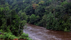 Tropical river in the jungle of Africa. River in tropical jungle. Africa. Equatorial Guinea.n stock video
