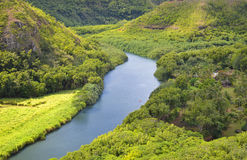 Tropical river in jungle, areal view. Tropical river in forest, areal view. Great green vegetation Royalty Free Stock Photography