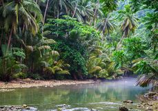 Tropical river in jungle forest greenery. Summer travel landscape with palm leaf over calm river water. Green river with trees reflection. Relaxing tropical Stock Photos