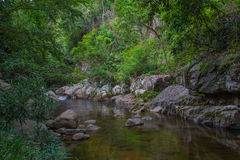 Tropical river in jungle Royalty Free Stock Photos
