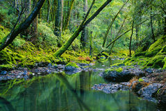 Tropical River and Lush Green Forest Stock Photos