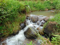 Tropical river. Natural tropical river Stock Photography