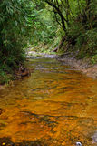 Tropical river. In North Vietnam stock photography