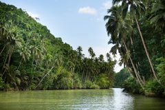 Tropical river with palm trees Royalty Free Stock Photography