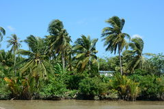 Tropical river with palm trees Royalty Free Stock Photos