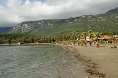 Tropical river shoreline Royalty Free Stock Image