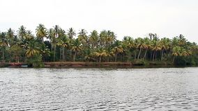 Tropical river at sunny day. Tropical river with palm trees at sunny day stock video footage