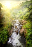 Tropical river at sunrise Stock Photography