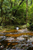 Tropical river in Vietnam. Tropical river in North Vietnam royalty free stock images