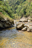 Tropical river. View of small vietnamese river royalty free stock images