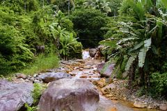 Summer travel landscape with palm leaves over fresh water river. Royalty Free Stock Images