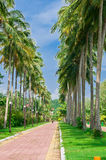 Tropical Road Stock Image