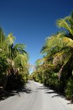 Tropical Road. A tropical road with palm trees along the side in Tulum, Carabean Royalty Free Stock Photo