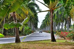 Tropical road in Dominican Republic Royalty Free Stock Image