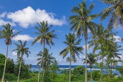 Tropical Samoa. With clear blue waters and coconut palms Royalty Free Stock Photos