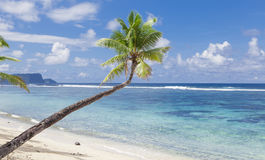 Tropical Samoa. With white sandy beaches and coconut palms Royalty Free Stock Photos