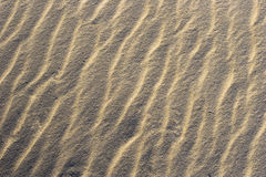 Tropical sand background Royalty Free Stock Images