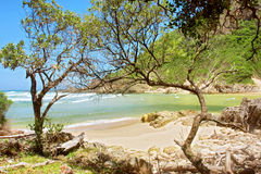 Tropical sand beach behind trees Royalty Free Stock Photos