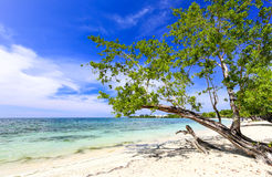 Tropical sand beach with a green tree, Carribeam Royalty Free Stock Photography