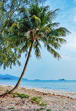 Tropical sand beach Stock Images