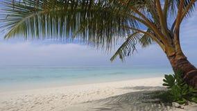 Tropical sand beach , South Ari Atoll , Maldives Royalty Free Stock Image