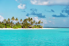 Tropical sand beach with palm trees royalty free stock images