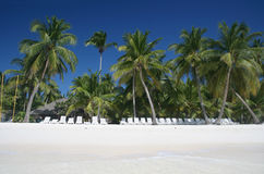 Tropical Sand Beach and Palm Trees. Tropical Paradise - White Sands Beach, Lounge Chairs and Coconut Palm Trees background suitable for a variety of traveling Royalty Free Stock Image