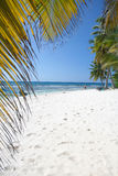 Tropical Sand Beach and Palm Trees Royalty Free Stock Images