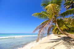 Tropical sand beach. With palm trees, Dominican Republic Stock Images
