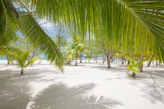 Tropical sand beach with palm trees, no people. Island life Royalty Free Stock Photos