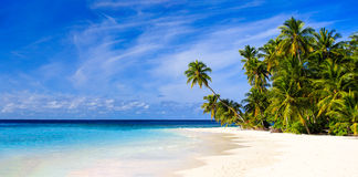 Tropical sand beach with palm trees Stock Photo