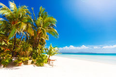 Tropical sand beach with palm trees, summer vacation.  Stock Photography