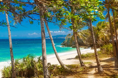 Tropical sand beach with palm trees, summer vacation Royalty Free Stock Images