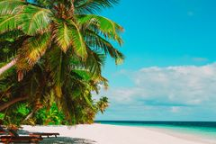 Tropical sand beach with palm trees. Travel destination Royalty Free Stock Photo