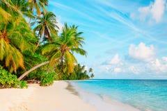 Tropical sand beach with palm trees. Travel destination Stock Photos