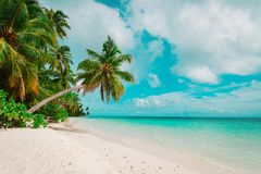 Tropical sand beach with palm trees Stock Image