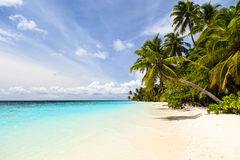 Tropical sand beach with palm trees Stock Photography