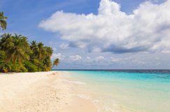 Tropical sand beach with palm trees Stock Photos