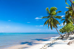 Tropical sand beach with palm trees, vacation Stock Photography