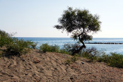 Tropical sand beach with Tree . Limassol in Cyprus Stock Images