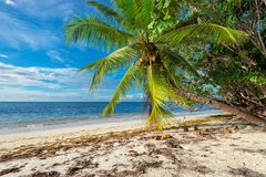 Untouched tropical beach. stock photo