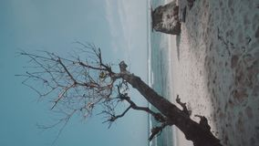 Tropical sandy beach. Beautiful tropical sandy beach with tree against amazing ocean with blue summer sky background - vertical video in slow motion stock footage