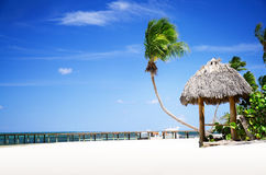 Tropical Sandy Beach in Dominican Republic, Punta Cana royalty free stock image