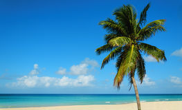 Tropical sandy beach with exotic palm tree, against blue sky and azure water Royalty Free Stock Image