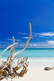 Tropical sandy beach with old dry wooden branch Royalty Free Stock Image