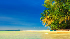 Tropical sandy beach overgrown green palm tree with clear sea water on background blue sky Stock Photography
